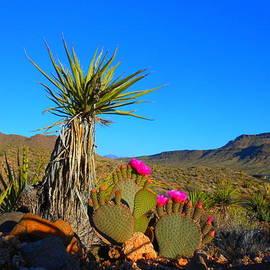 James Welch - Springtime In The Desert