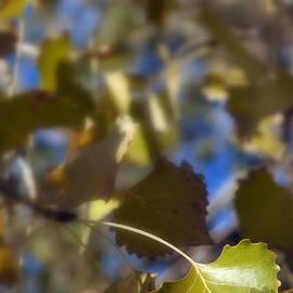 Lisa Holland-Gillem - Under The Cottonwood Canopy