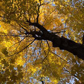 Georgia Mizuleva - Under the Golden Maple Canopy