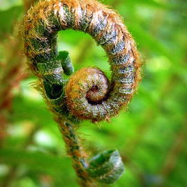 Brian Chase - Unfurling Fiddlehead Green