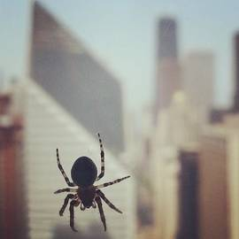 Up Here With The Spiders