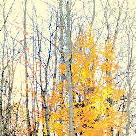 Vestiges of Autumn by Kathy Barney