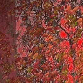 Vines by Barbie Corbett-Newmin