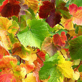 Debra Orlean - Vines for Wine