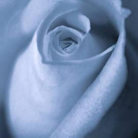 Jennie Marie Schell - Vintage Blue Rose Bud Flower