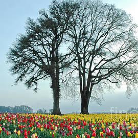 Nick  Boren - Visions Of Spring