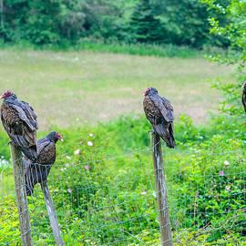 Vulture Fence Line Salt Spring Island by Roxy Hurtubise