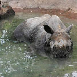 Judy Whitton - Wading Rhinos