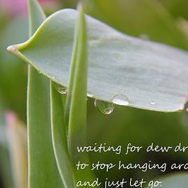 Jeff Swan - Waiting For Dew Drops