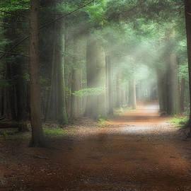 Walk In The Woods by Bill Wakeley