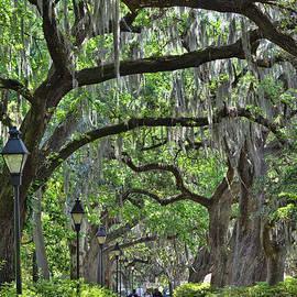 Walking Under the Oaks by Allen Beatty