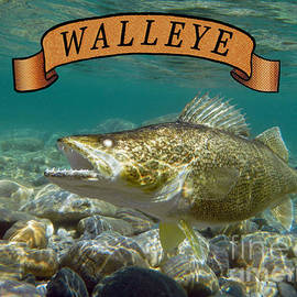 WALLEYE with BANNER