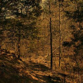 Nina Fosdick - Wanderings