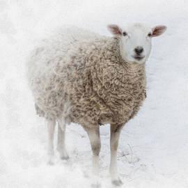 Robin-Lee Vieira - Warm and Fuzzy