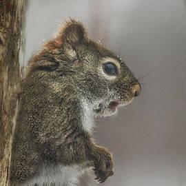 Susan Capuano - Watcher In The Woods