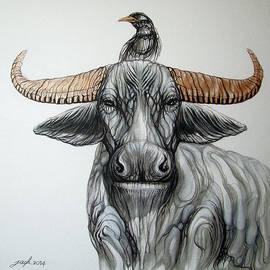 Jack No War - Water Buffalo - Myna Bird