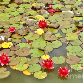 Katy Mei - Water lilies