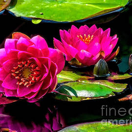 Nick Zelinsky - Water Lily 2014-12