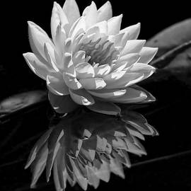 Dawn Currie - Water Lily Reflections III