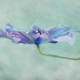 Claudia Moeckel - watercolor II