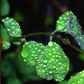 Jeff Swan - Waterdrops In Color