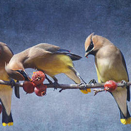 Waxwings On Crab Apple Branch by R christopher Vest