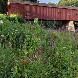 Bill Wakeley - West Cornwall WIldflowers