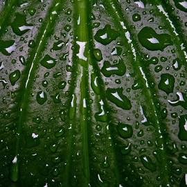 Henry Kowalski - Wet Hosta Leaf