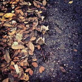 Wet Leaves In November