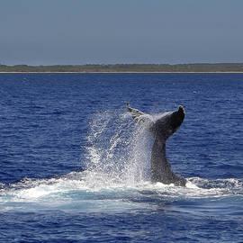 Whale Tale Splash II by Penny Lisowski