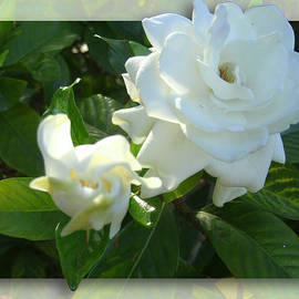 Ginny Schmidt - Whats so Special about White Flowers