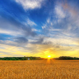 Wheat field sunset by Alexey Stiop