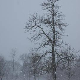 Georgia Mizuleva - Whispering Snowflakes