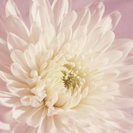 Whispering White Floral by Kim Hojnacki