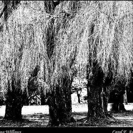Whispering Willows by Carol F Austin
