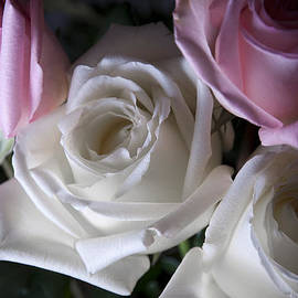 White And Pink Roses by Jennifer Ancker