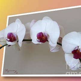 White and Violet Orchids by Mariarosa Rockefeller