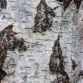 Heidi Smith - White Birch Abstract