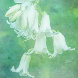White Bluebell by Lynn Bolt