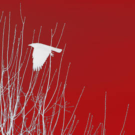 White Crow Red Sky by Lesa Fine