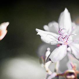 Bradley R Youngberg - White Flower II