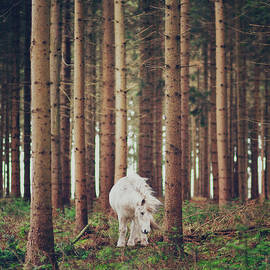 White Horse In The Wood by Julia Davila-lampe