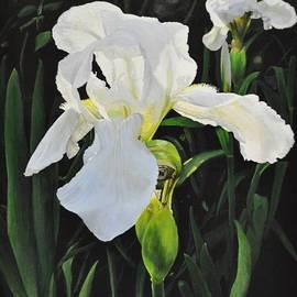 Emily Land - White Iris