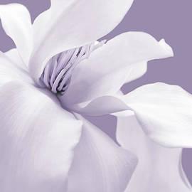 White Magnolia Flower Lavender by Jennie Marie Schell
