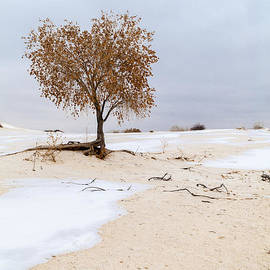Brian Harig - White Sands Lone Tree