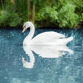Nila Newsom - White Swan on Blue Water