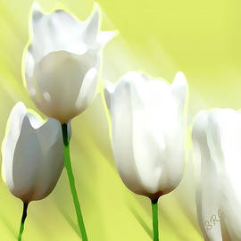 White Tulips by Ben and Raisa Gertsberg