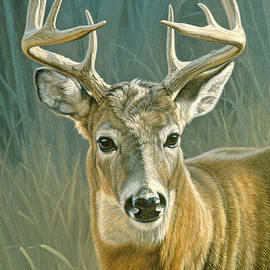 Whitetail Buck by Paul Krapf
