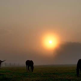 Bill Cannon - Widner Farm at Sunrise