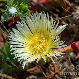 Wild Flower by Stephen Whalen